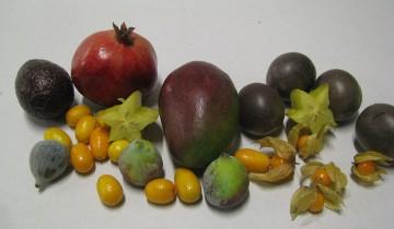exotische-fruechte